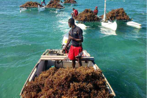 Our-seaweed-breeding-base